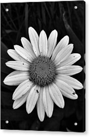Acrylic Print featuring the photograph Sunshine by Janice Spivey