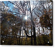 Sunshine Through The Trees In The Fall Acrylic Print by Angelika MacDonald