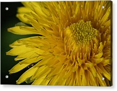 Sunshine Weed Acrylic Print by Peg Toliver