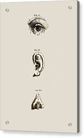 Surface Anatomy Of The Eye, Ear And Nose Acrylic Print