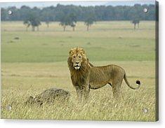 Surveying His Kingdom Acrylic Print by Michele Burgess
