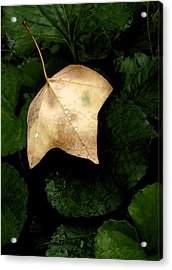 Suspended Leaf Acrylic Print by Glenn Donze