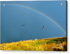 Swallows Under A Rainbow Acrylic Print by Thomas R Fletcher