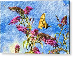 Swallowtail And Butterfly Bush Acrylic Print by Heidi Smith