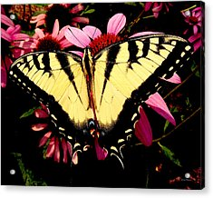 Acrylic Print featuring the photograph Swallowtail Butterfly On A Purple Coneflower by George Bostian