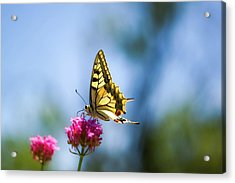 Swallowtail Butterfly On Pink Flower Acrylic Print by Alexandre Fundone