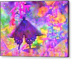 Swallowtail Acrylic Print by Judi Bagwell