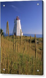 Swallowtail Lighthouse And Cat Tails Acrylic Print