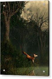 Swamp Fox Acrylic Print by Daniel Eskridge