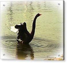Swan Dance 3 Acrylic Print by Blair Stuart