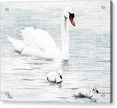 Acrylic Print featuring the drawing Swan Family by Brent Ander