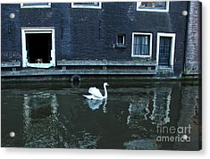 Swan In Amsterdam Canal Acrylic Print by Gregory Dyer
