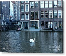 Swan In Amsterdam Acrylic Print by Gregory Dyer