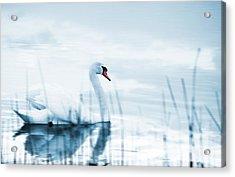 Swan Acrylic Print by Jaroslaw Grudzinski