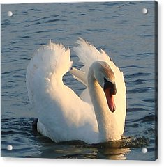 Acrylic Print featuring the photograph Swan by Katy Mei