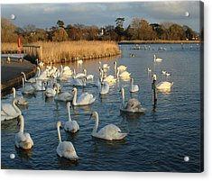 Acrylic Print featuring the photograph Swan Lake by Katy Mei
