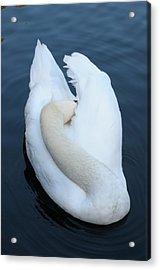 Swan Acrylic Print by Luis Esteves