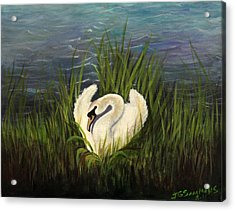 Acrylic Print featuring the painting Swan Nesting by Janet Greer Sammons