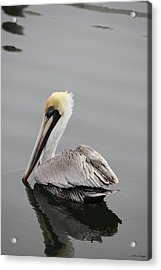 Swan Of The Gulf Coast Acrylic Print by Deborah Hughes