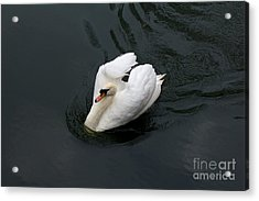 Acrylic Print featuring the photograph Swan On Black Water by Les Palenik