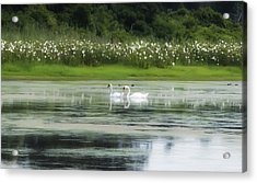 Swan Pond Acrylic Print by Bill Cannon