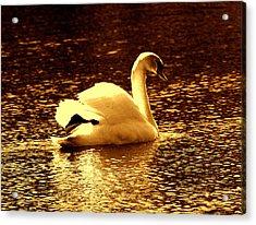Swan Song 3 Acrylic Print