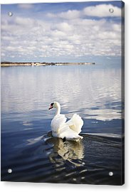 Swan Song Acrylic Print by Vicki Jauron