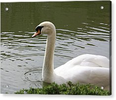 Acrylic Print featuring the photograph Swan by Susan Alvaro