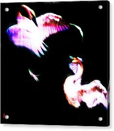 Swans Acrylic Print by Adam Vance