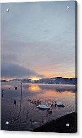Swans In Lake At Sunrise Acrylic Print by I Z U M I N I A