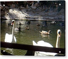 Swans On The Lake Acrylic Print by De Beall