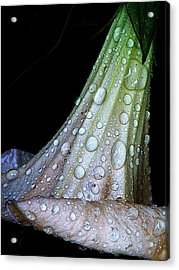 Sweet And Rainy Acrylic Print by Chris Berry
