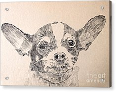 Sweet Chi Acrylic Print by Robbi  Musser
