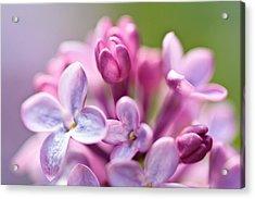 Sweet Lilac Acrylic Print by Mitch Shindelbower