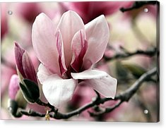 Acrylic Print featuring the photograph Sweet Magnolia by Elizabeth Winter