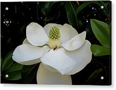 Acrylic Print featuring the photograph Sweet Magnolia by Paul Mashburn