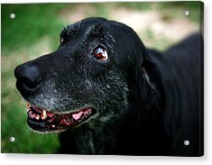 Acrylic Print featuring the photograph Sweet Mariah by Lon Casler Bixby