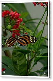Acrylic Print featuring the photograph Sweet Nectar by Frank Wickham
