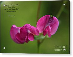 Acrylic Print featuring the photograph Sweet Pea Flower by Tyra  OBryant