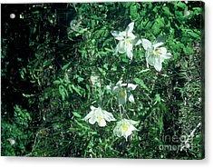 Sweet Summer Acrylic Print by Alcina Morello