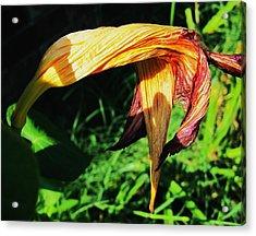 Sweet Surrender Acrylic Print by Todd Sherlock
