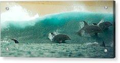 Swim Thru Acrylic Print