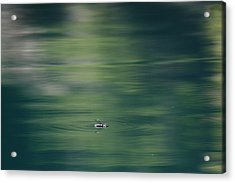 Swimming Beetle Acrylic Print by Cathie Douglas