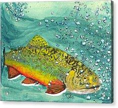Swimming Upstream Acrylic Print by Sheryl Brandes
