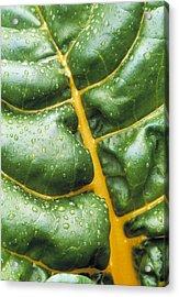 Swiss Chard Leaf Acrylic Print by Kaj R. Svensson