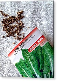 Swiss Chard Seeds Acrylic Print by Will Borden