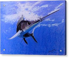 sword Fish Acrylic Print by David Hawkes