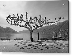 sycamore trees in Ascona - Ticino Acrylic Print by Joana Kruse