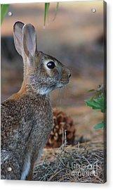 Sylvia Acrylic Print by Lynda Dawson-Youngclaus