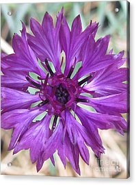 Acrylic Print featuring the photograph Symetrically Sane by Tina Marie
